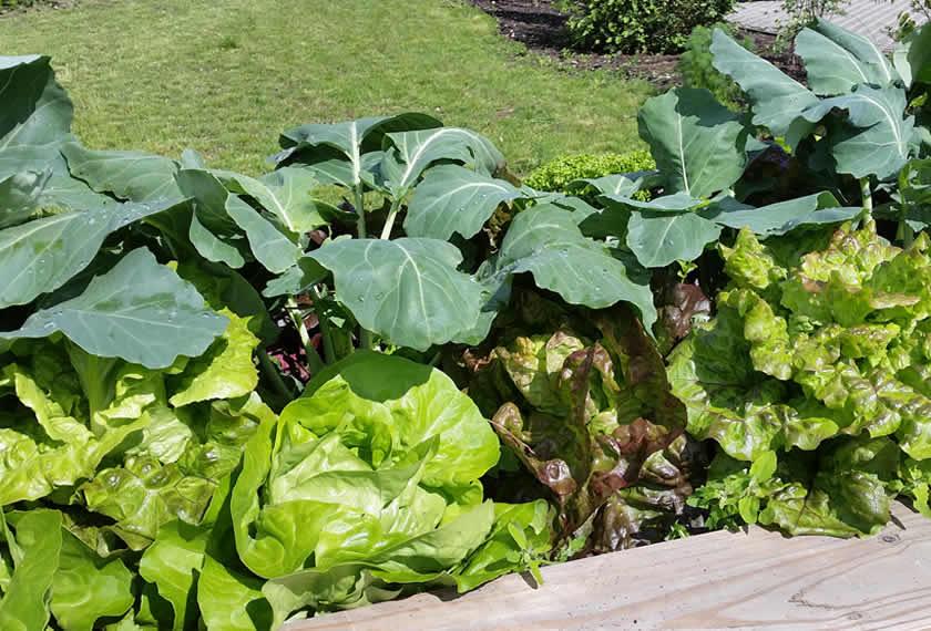 Die Bodenpflege im Garten