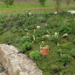 Gartenmulch