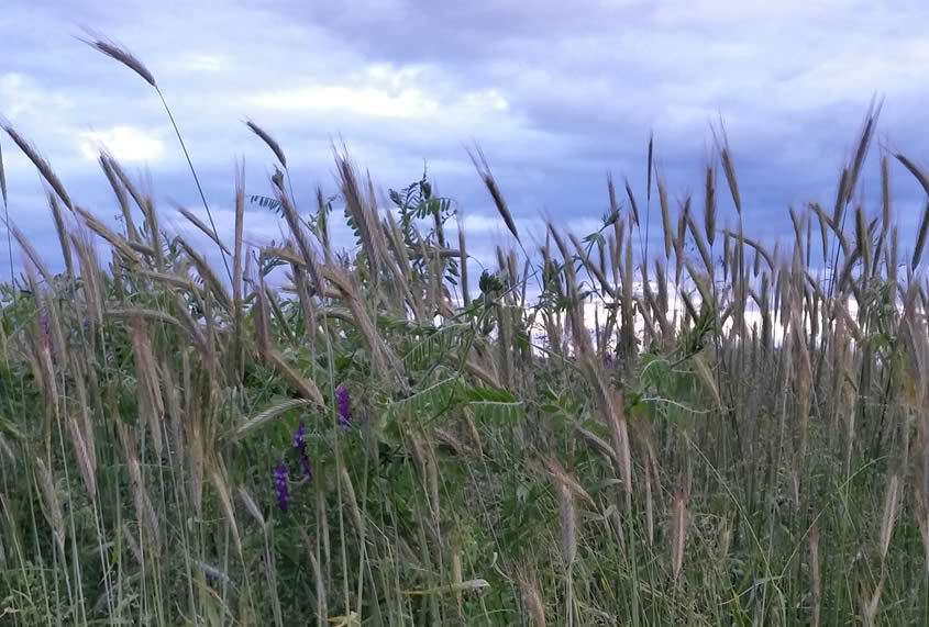 Pflanzenstärkung statt Pflanzenschutz