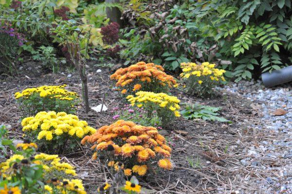 Neupflanzen im Herbst