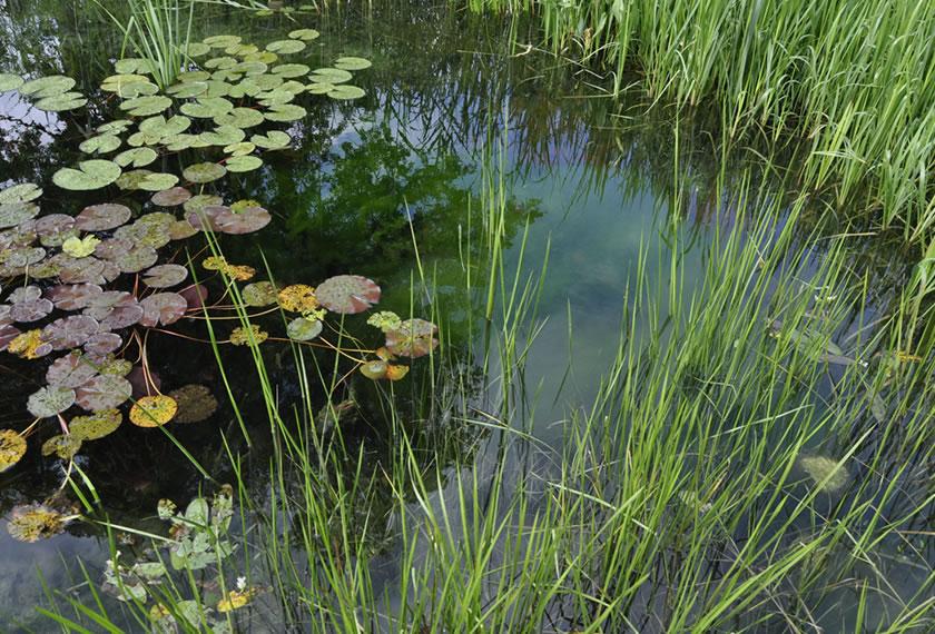 EM-Gewässer-Sanierung im Herbst