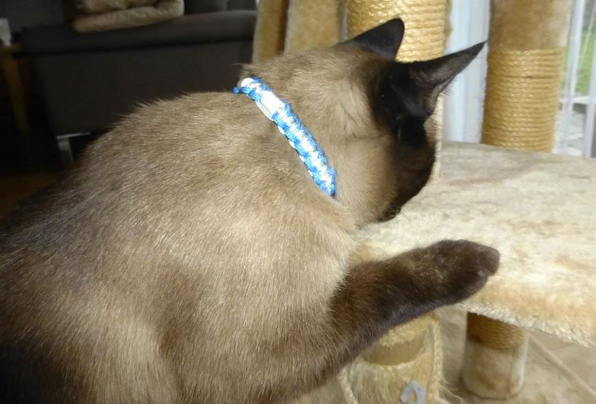 Videlio macht Katzen froh