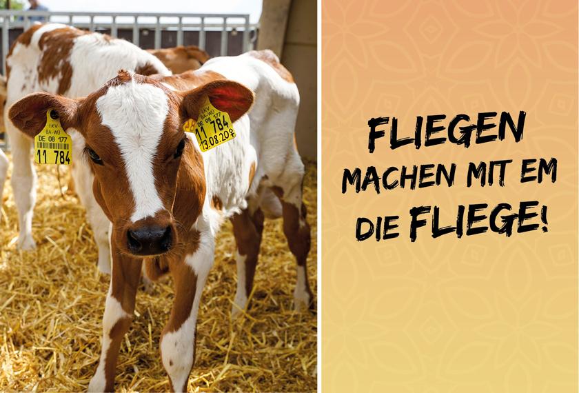 Fliegen-EM-Stallklima_Cover_EM-Chiemgau