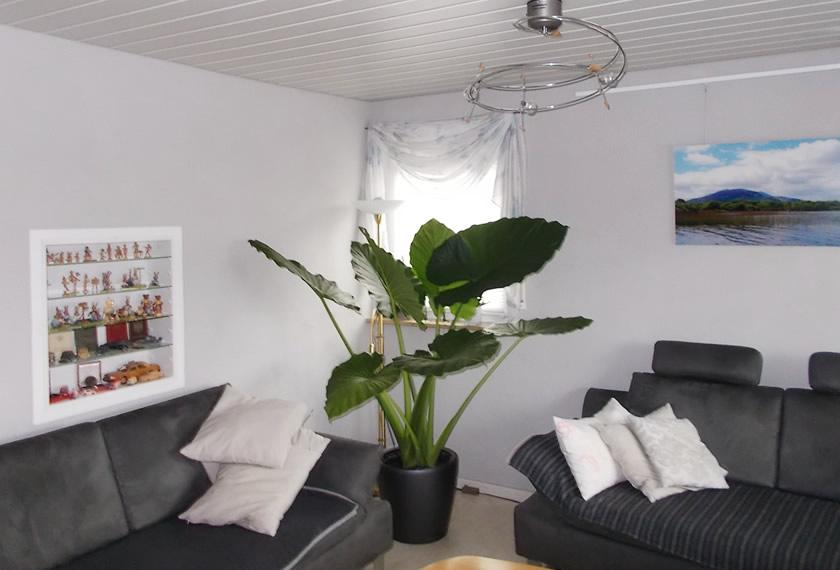 Zimmerpflanze-Alokasie