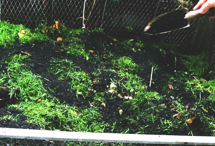 Rasen_Kompost_RoPro-Streu-Pflanzenkohle-von EM-Chiemgaue