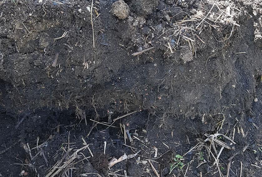 RoPro-Streu_in_Kompost