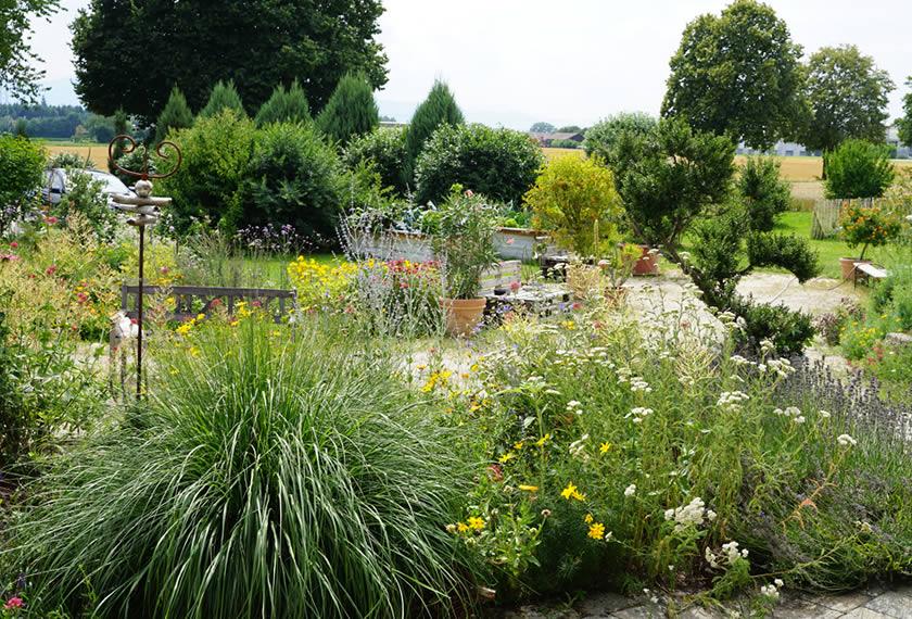 Sommer im EM Garten