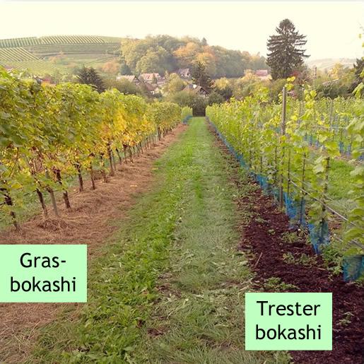 Bokashi EM Weinbau