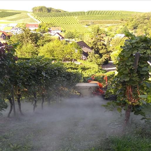 EMLeben-EMLeute Der besondere EM-Wein