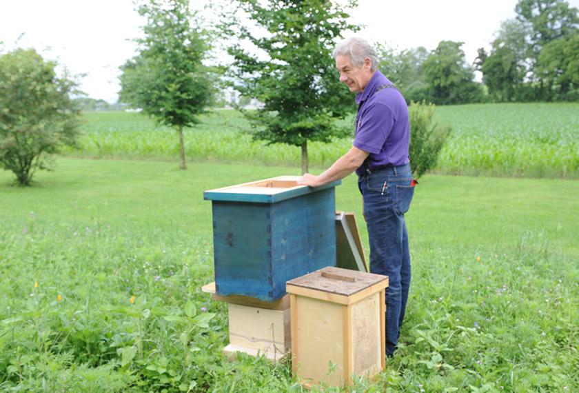 EM-Anwendungen bei Bienen