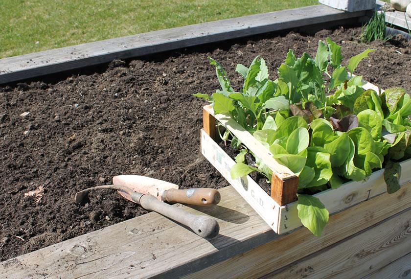 Bepflanzen nach 10-14 Tagen