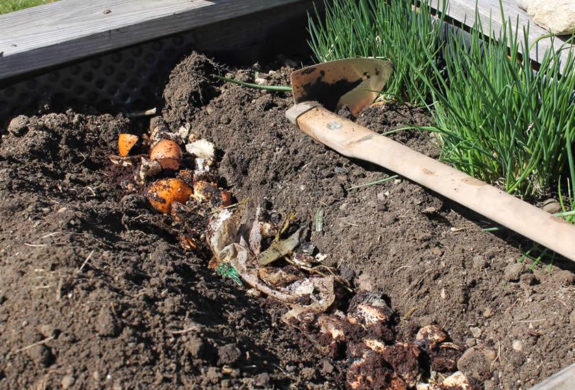 Bokashi wird im Beet eingegraben