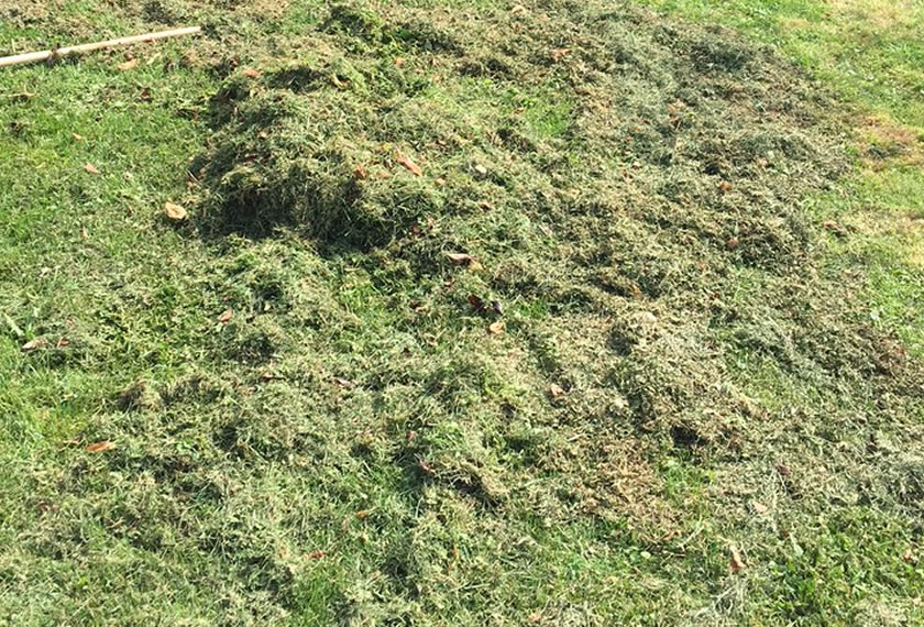 Rasen antrocken lassen