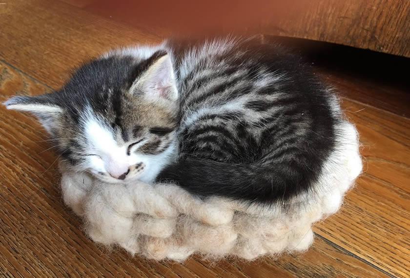 Katzenwohl-mit-EM-Pflege-EM-Chiemgau