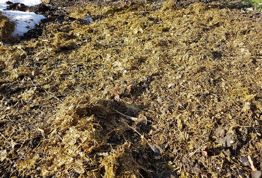 Rasenbokashi-ausgebracht-schuetzt-den-Boden-EM-Chiemgaut