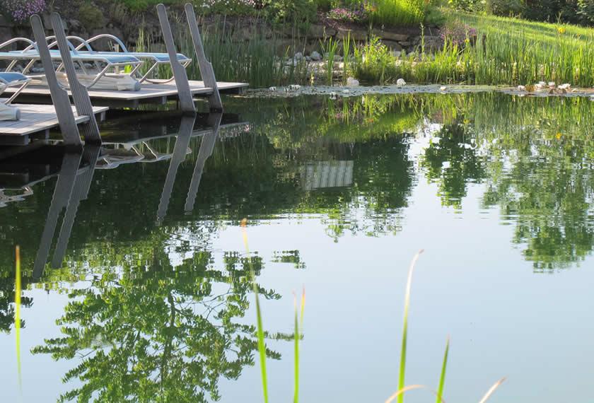 Algen im Teich – was tun?