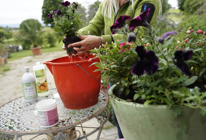 Bokashi für Balkon- und Kübelpflanzen