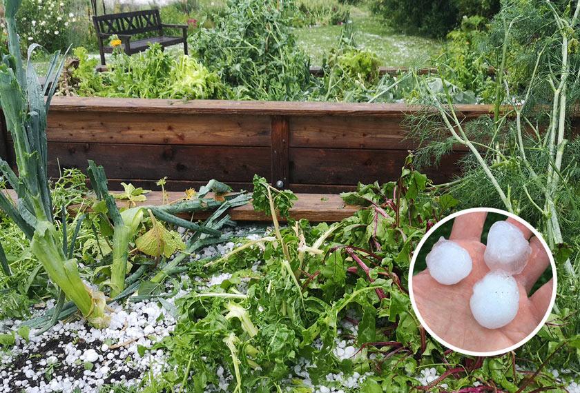 Was tun bei Hagelschäden im Garten?