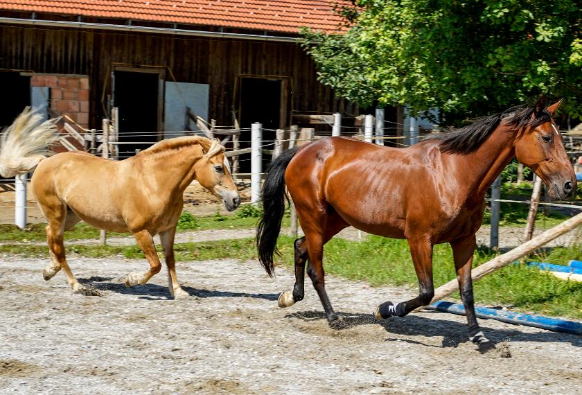 Pferde im Sommer mit EM behandeln