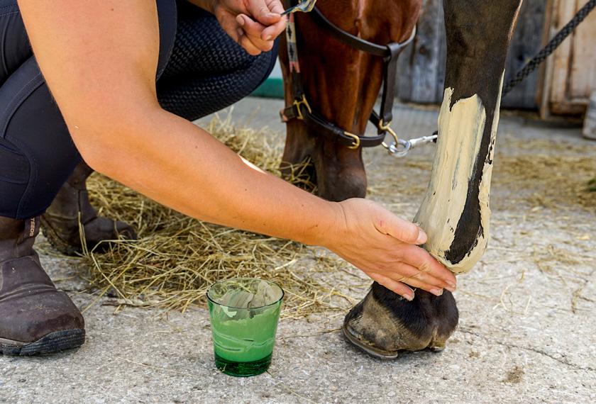 Meine EM-Stallapotheke – Schnelle erste Hilfe bei Pferden