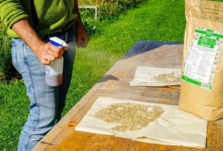 Rasenpflege im Herbst mit EM Grassamen beizen mit EM-aktiv und RoPro-Lit Gesteinsmehl